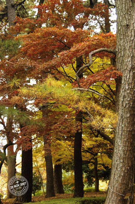 Autumn colours in Shinjuku Gyoen National Park, Tokyo, Japan