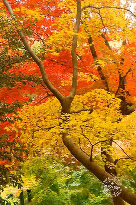 Shinjuku Gyoen, Tokyo, Japan autumn leaves - red, yellow, green (momiji/kouyou)