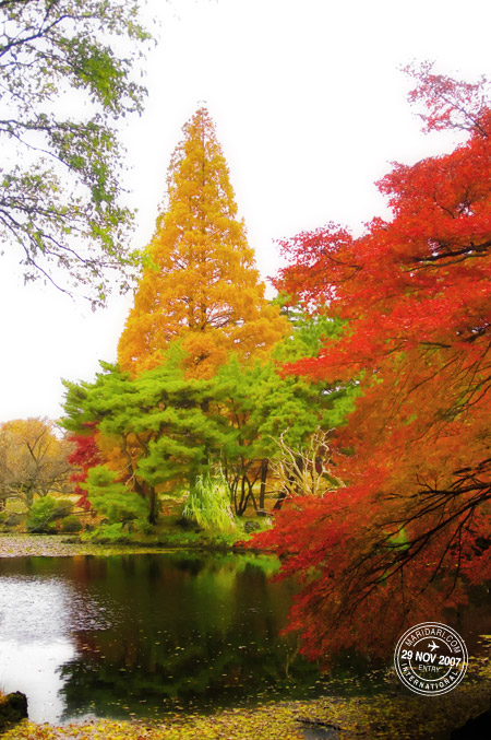 Shinjuku Gyoen National Garden - lake, green, red, yellow autumn leaves