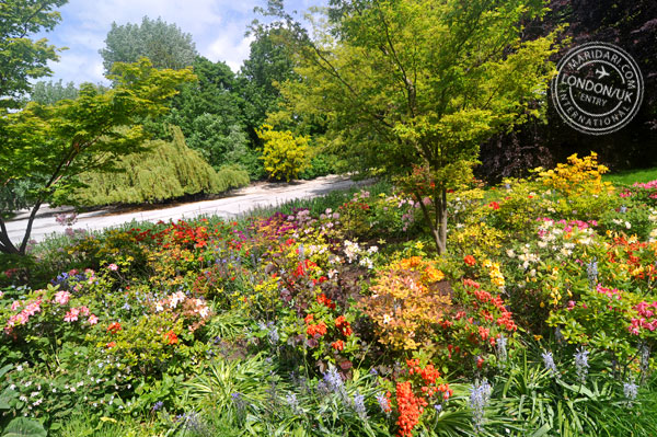An English garden in Spring - colorful flowers at St. James Park near Buckingham Palace in London