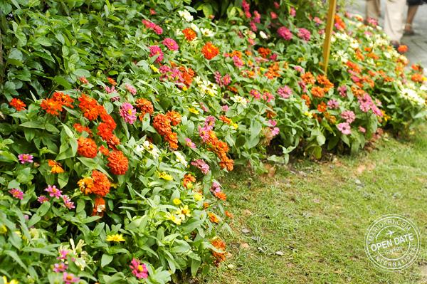 Sentosa Flower festival 2011