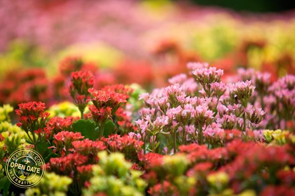 Sentosa Flowers Spring Wonderland 2011