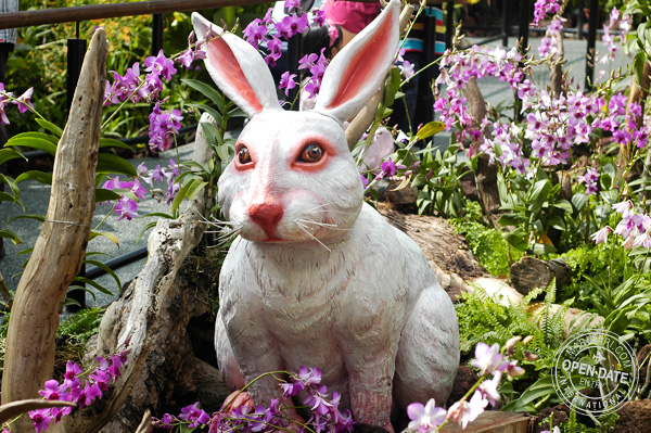 Sentosa Flowers - Year of the Rabbit 2011 - Spring Wonderland