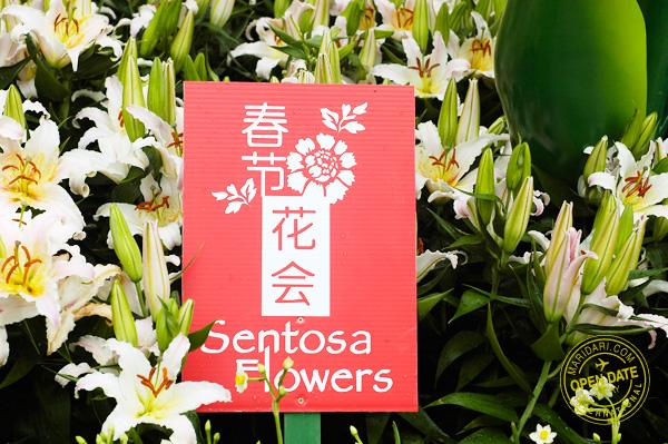 Sentosa Flowers 2011