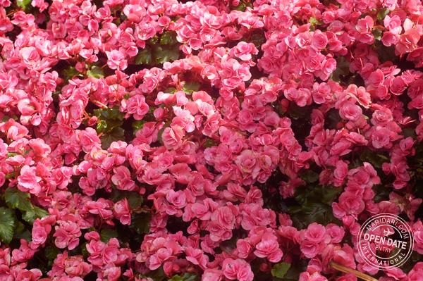 Sentosa Island flower festival